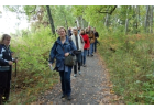 Guided Walk in Djurgården